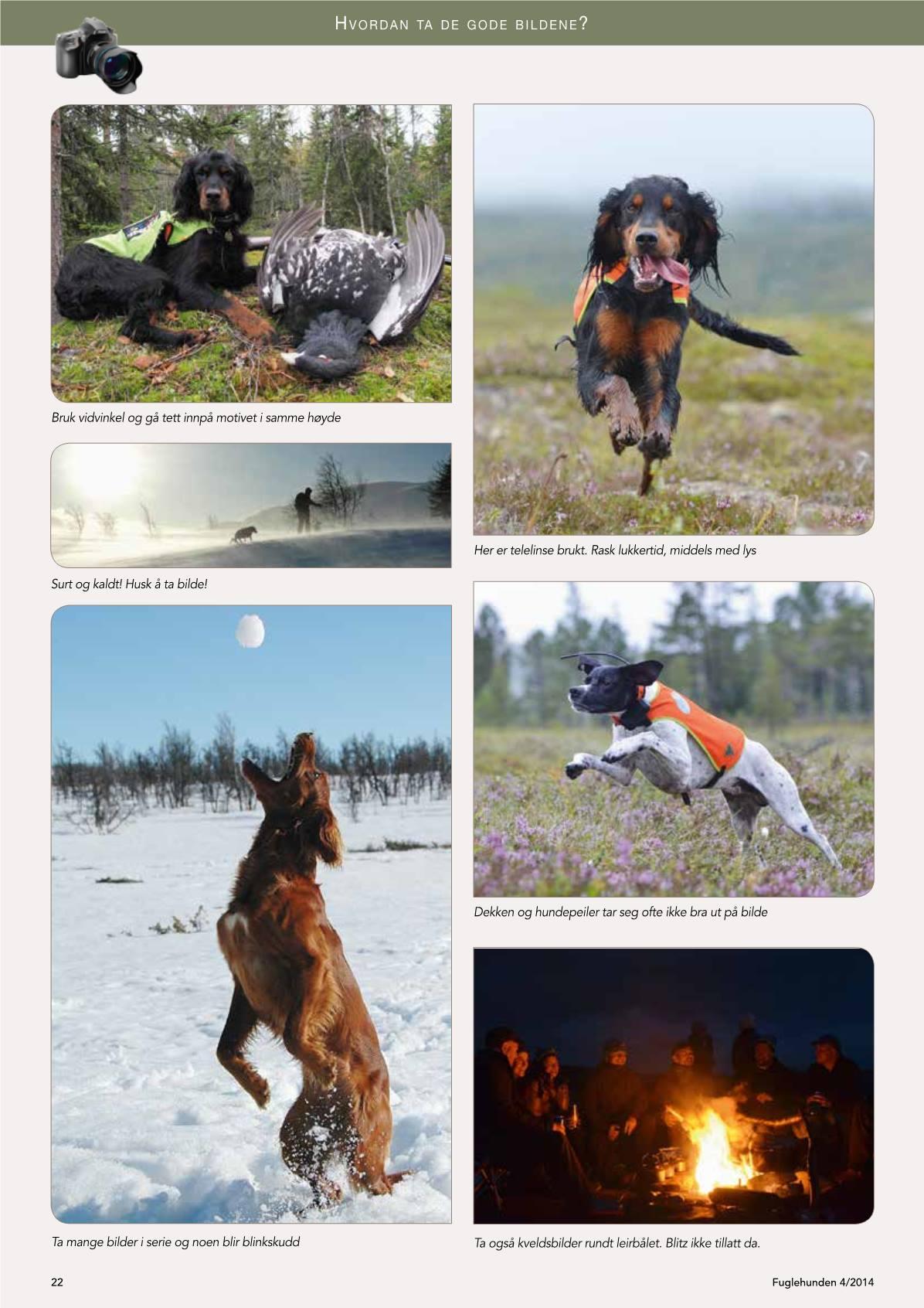 treningsomrader for hund