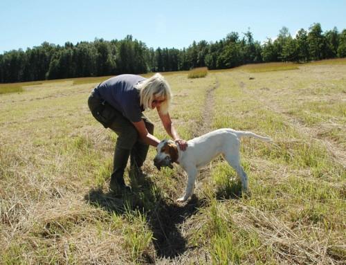 Er positiv hundetrening = fri oppdragelse?