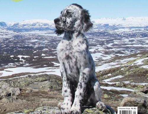 Fuglehunden 1-2016
