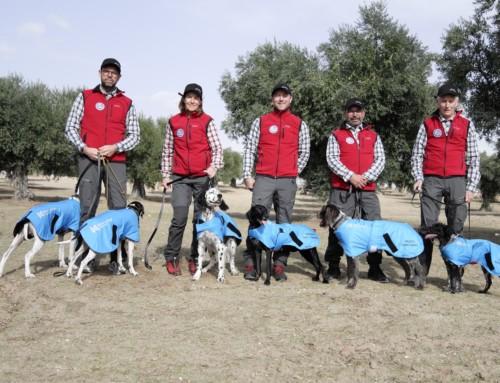 VM for stående fuglehunder: Ingen premie så langt