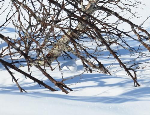 Klar for vinterprøvene
