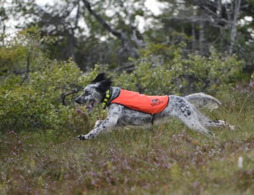 Slipp hund lovlig i august