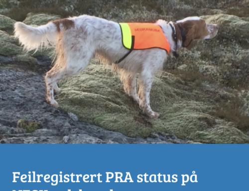 Feilregistrert PRA-status på avlshund